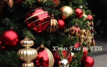 X'mas Tree in TDS